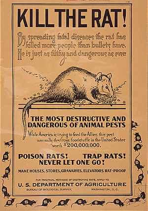 Thallium rat poison