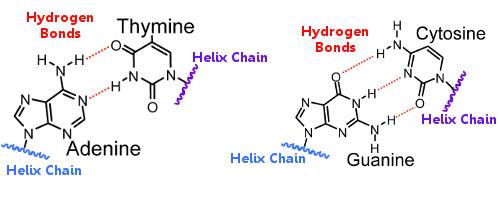 discuss why hydrogen bonding is essential Hydrogen bonding plays an essential role in natural polymers of biological origin in two ways: water covers water and hydrogen bonding for a course in general.